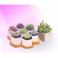 LED GROW trubica pre rast kaktusov a sukulentov, 10W, 60 cm, plné spektrum ružovo-fialová