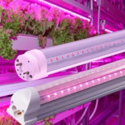 LED GROW trubice
