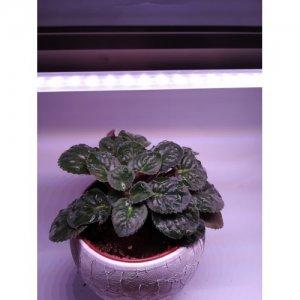 30 cm - LED GROW trubica pre rast rastlín, 5W, plné spektrum slabo-ružová