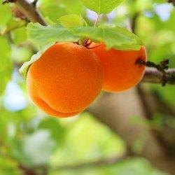 Marhule a nektarinky