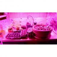 LED GROW trubica pre rast rastlín, 5W, 30 cm, červeno-modrá