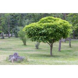 Alejové a listnaté stromy
