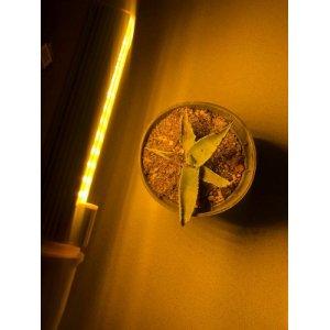 15 W - PROFI LED GROW žiarovka pre všetky rastliny, E27, SUNLIGHT