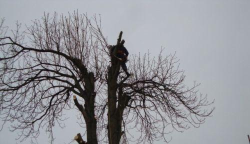 Výškové práce - arboristika